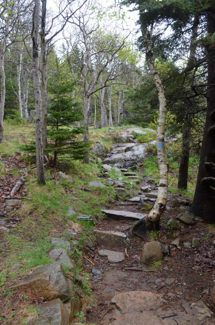 Acadia_BarHarbor-Maine (21/231)