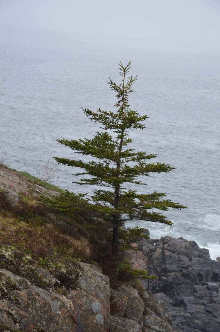 Acadia_BarHarbor-Maine (30/231)
