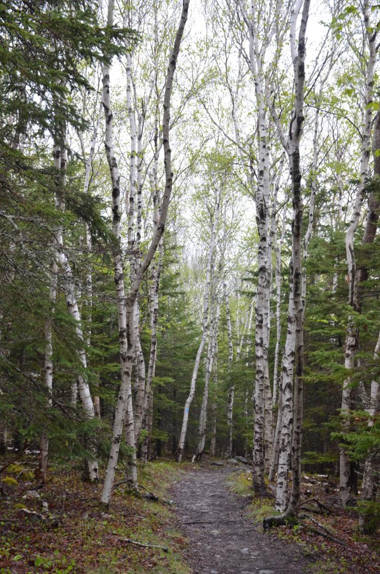 Acadia_BarHarbor-Maine (60/231)