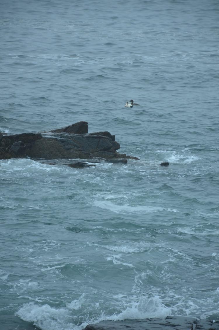 Acadia_BarHarbor-Maine (67/231)