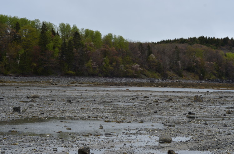 Acadia_BarHarbor-Maine (158/231)