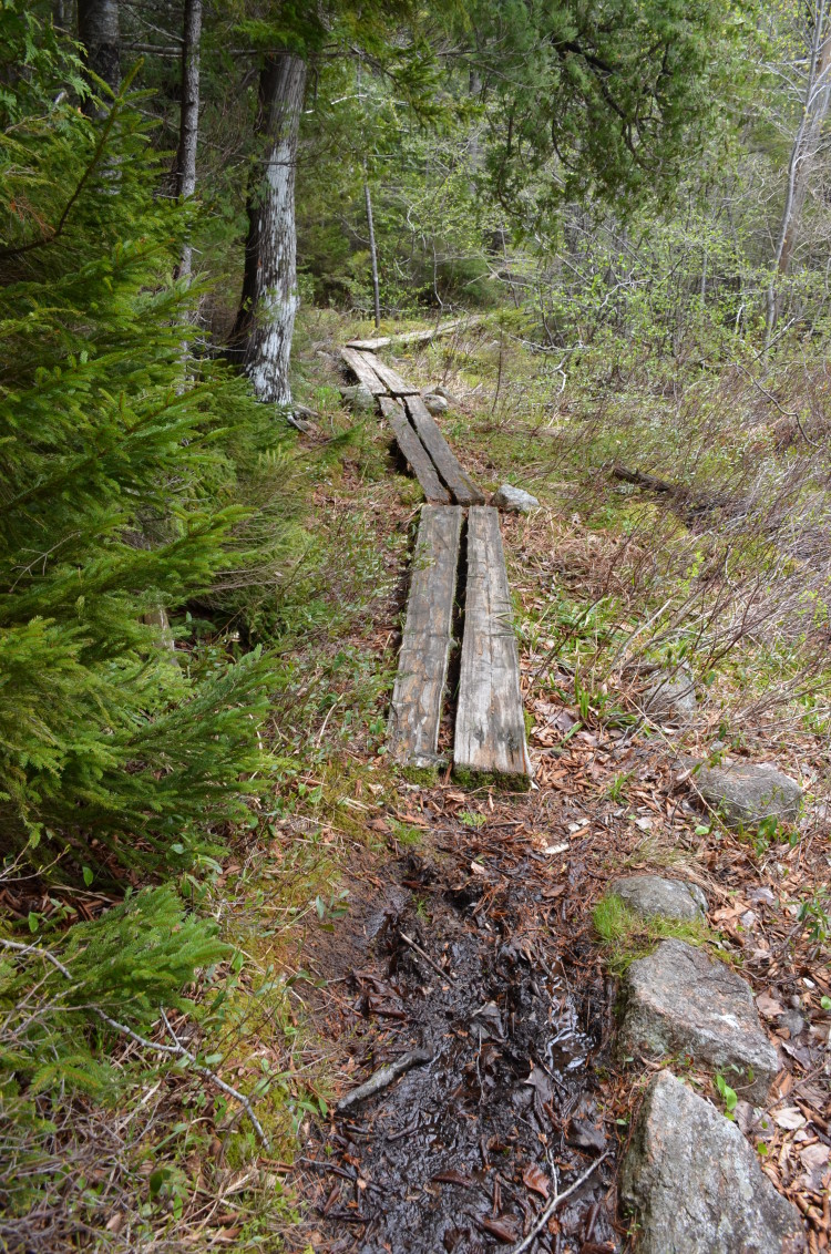 Acadia_BarHarbor-Maine (179/231)
