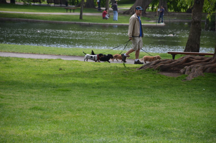 Boston_Hahvahd (259/302)