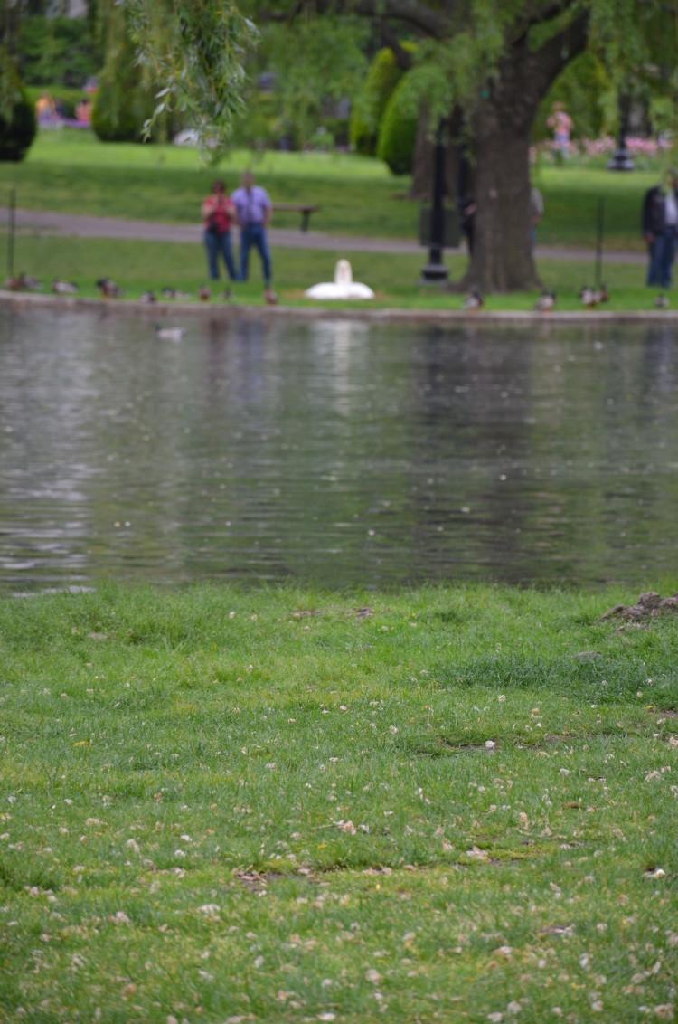 Boston_Hahvahd (299/302)