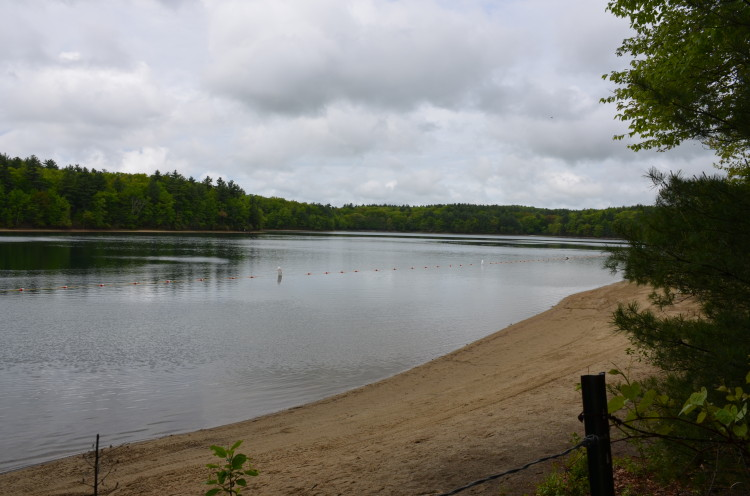 Walden Pond (13/28)