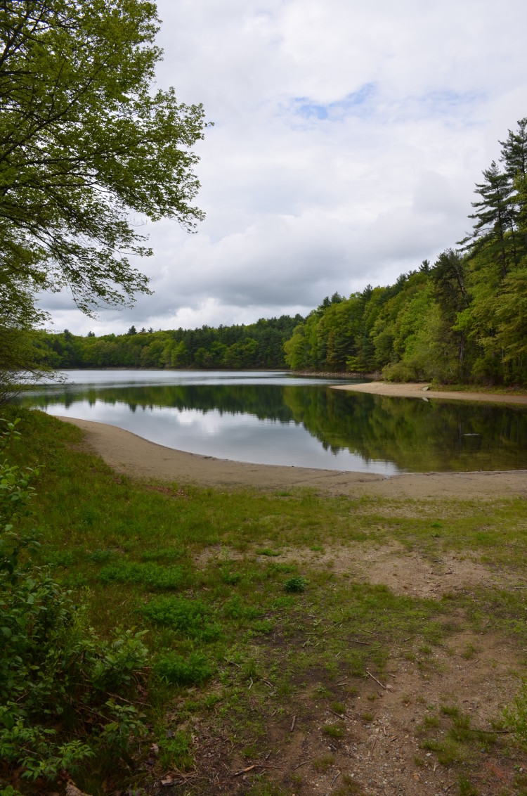 Walden Pond (16/28)