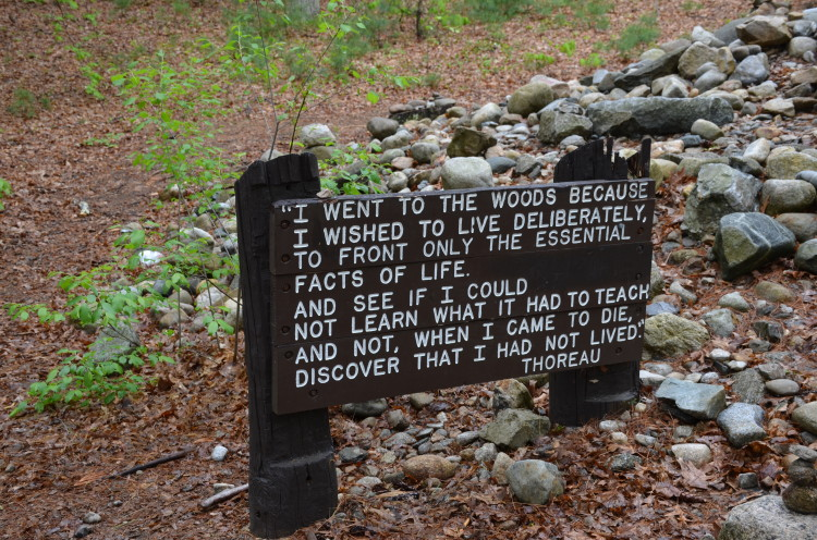 Walden Pond (17/28)