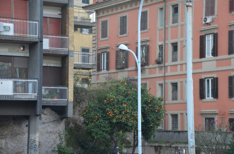 Rome Day 3 (21/293)