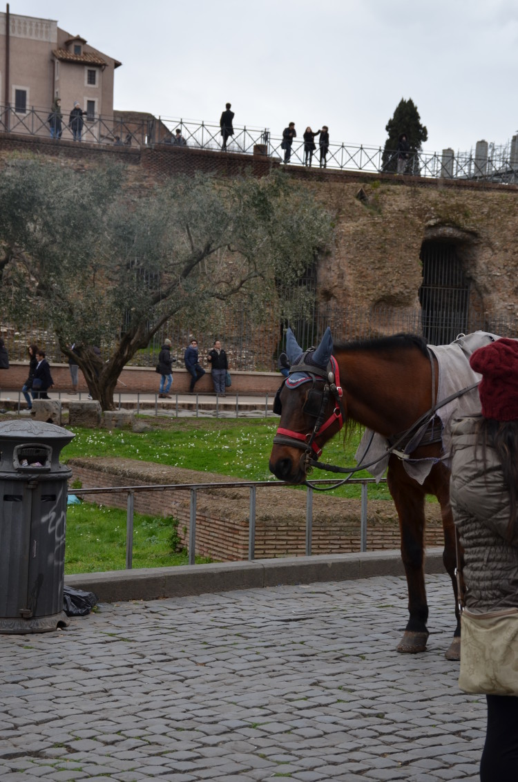 Rome Day 3 (216/293)