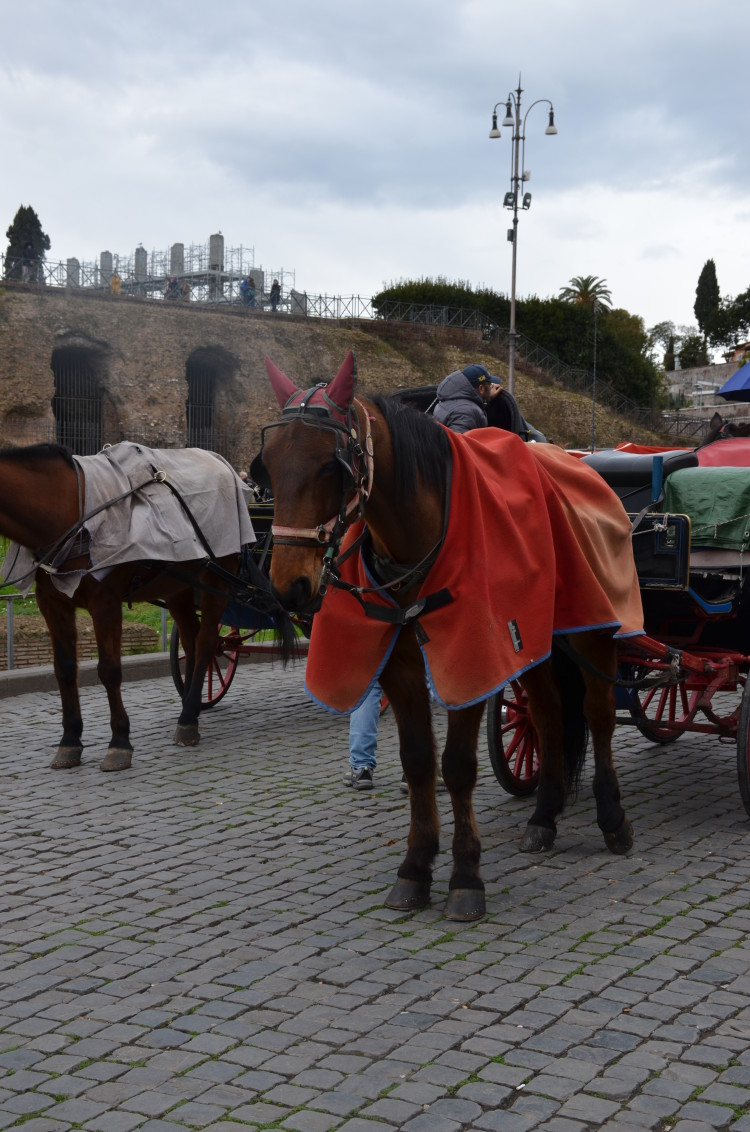 Rome Day 3 (217/293)